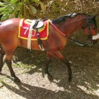 "Conquest of Paradise AKA Coco (Breyer ""Seabiscuit"", John Henry Mold)"