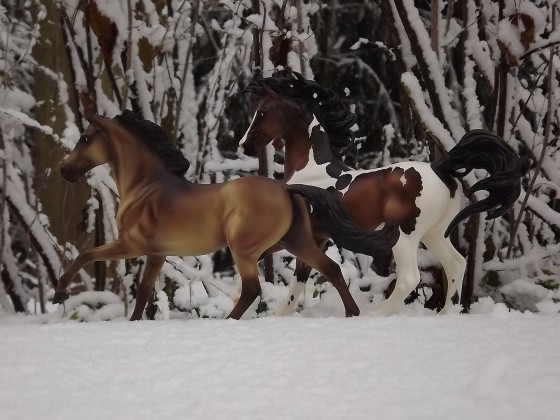 Mustangs in the snow