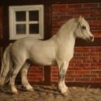Mojö Welsh Pony
