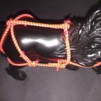 Pony/ Kleinpferde Geschirr (Zu verkaufen!)