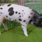 2. Kalle II trifft das Riesenschwein: Hey Kleiner, neu hier ?